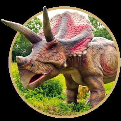triceratops-rund2